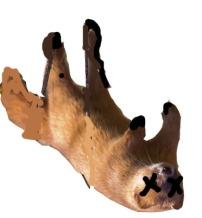 Weasel_Dead